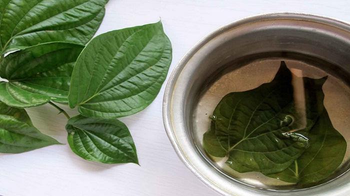 5 Tanaman Herbal Yang Ampuh Untuk Mengatasi Keputihan